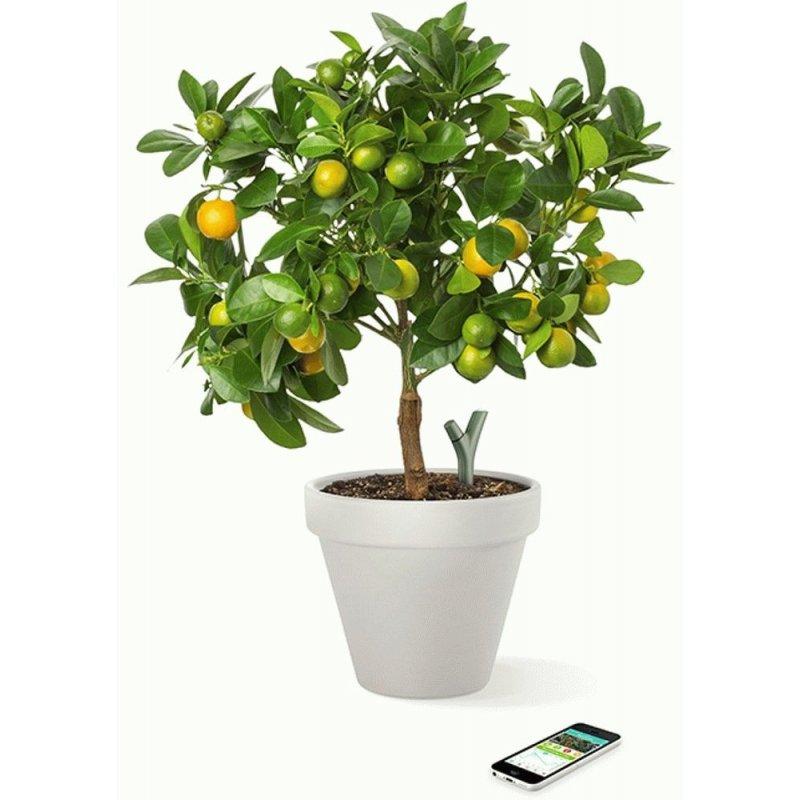 Parrot Flower Power Green (PF900001AA)